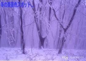 奈良の霧氷